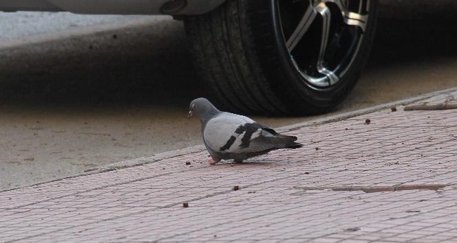 Güvercinin ayaklarını kestiler