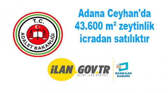 Adana Ceyhan'da 43.600 m² zeytinlik icradan satılıktır