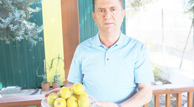 Çiftçinin çöpe attığı ıskarta limon marketlerde 6 lira