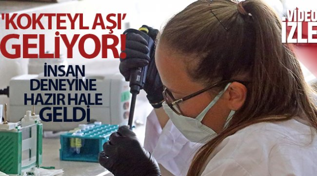 Covid-19'a karşı bitkiden üretilen 'kokteyl aşı' insan deneyine hazır hale geldi